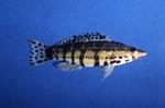 Sea bass by Glenn Parsons