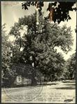 Grant Oak by J. R. Cofield