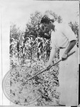 William Faulkner with pipe in mouth, hoeing garden by Marshall J. Smith