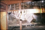 Negatives hang from a clothes line after the Cofield Studio fire, image 3 by J. R. Cofield