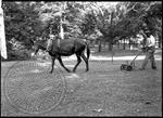 Mule pulls a reel lawnmower steered by an African American man by J. R. Cofield