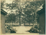 View of the flagpole in the Circle from the front porch of Gordon Hall by Author Unknown