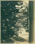 View of a portion of George Peabody Building from the Lyceum front porch by Author Unknown