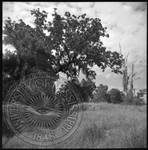Civil War Sites: Champion's Hill Battlefield, image 7 by Bern Keating