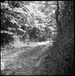 Civil War Sites: Champion's Hill Battlefield, image 8 by Bern Keating