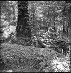 Civil War Sites: Champion's Hill Battlefield, image 9 by Bern Keating