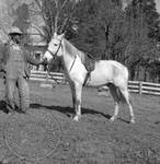Andrew Price standing with Faulkner's horse at Rowan Oak: Image 11 by Edwin E. Meek