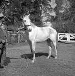 Andrew Price standing with Faulkner's horse at Rowan Oak: Image 12 by Edwin E. Meek