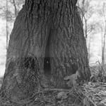 Base of a tree by Edwin E. Meek