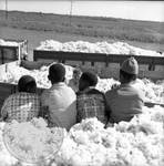 African American children and white children playing in bin of cotton: Image 6 by Edwin E. Meek
