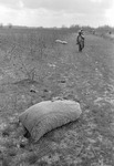 Cotton picking for Brown's Gin and Wholesale, image 014 by Martin J. Dain (1924-2000)