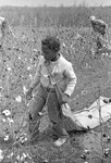 Cotton picking for Brown's Gin and Wholesale, image 032 by Martin J. Dain (1924-2000)