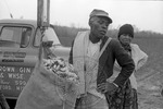 Cotton picking for Brown's Gin and Wholesale, image 033 by Martin J. Dain (1924-2000)