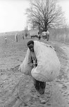 Cotton picking for Brown's Gin and Wholesale, image 037 by Martin J. Dain (1924-2000)