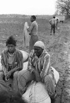 Cotton picking for Brown's Gin and Wholesale, image 024 by Martin J. Dain (1924-2000)