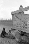 Cotton picking for Brown's Gin and Wholesale, image 076 by Martin J. Dain (1924-2000)