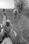 Cotton picking for Brown's Gin and Wholesale, image 026 by Martin J. Dain (1924-2000)