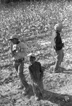 Cotton picking for Brown's Gin and Wholesale, image 097 by Martin J. Dain (1924-2000)