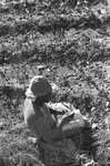 Cotton picking for Brown's Gin and Wholesale, image 098 by Martin J. Dain (1924-2000)