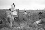 Cotton picking for Brown's Gin and Wholesale, image 087 by Martin J. Dain (1924-2000)