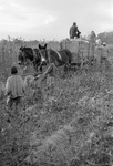 Cotton picking for Brown's Gin and Wholesale, image 113 by Martin J. Dain (1924-2000)