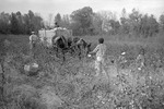 Cotton picking for Brown's Gin and Wholesale, image 115 by Martin J. Dain (1924-2000)