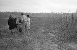 Cotton picking for Brown's Gin and Wholesale, image 118 by Martin J. Dain (1924-2000)