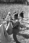 Cotton picking for Brown's Gin and Wholesale, image 121 by Martin J. Dain (1924-2000)
