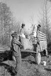 Cotton picking for Brown's Gin and Wholesale, image 091 by Martin J. Dain (1924-2000)