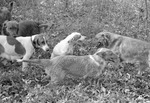 Dogs, image 001 by Martin J. Dain (1924-2000)