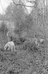 Dogs, image 003 by Martin J. Dain (1924-2000)