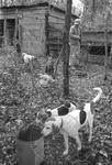 Hunting camp, image 004 by Martin J. Dain (1924-2000)