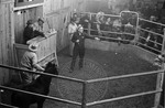 Livestock auction, image 004 by Martin J. Dain (1924-2000)