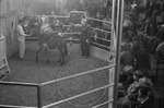 Livestock auction, image 007 by Martin J. Dain (1924-2000)