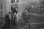 Livestock auction, image 008 by Martin J. Dain (1924-2000)