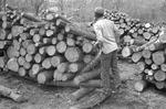 Lumber, image 002 by Martin J. Dain (1924-2000)