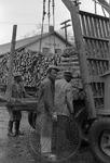 Lumber, image 010 by Martin J. Dain (1924-2000)