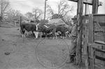 Rural Mississippi, image 003 by Martin J. Dain