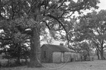 Rural Mississippi, image 009 by Martin J. Dain