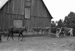 Rural Mississippi, image 015 by Martin J. Dain