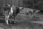 Rural Mississippi, image 016 by Martin J. Dain
