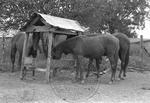 Rural Mississippi, image 017 by Martin J. Dain