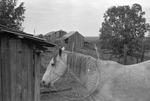 Rural Mississippi, image 019 by Martin J. Dain