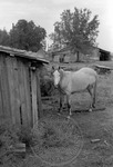Rural Mississippi, image 020 by Martin J. Dain