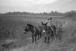 Rural Mississippi, image 029 by Martin J. Dain