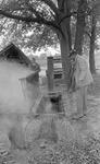 Sorghum syrup making, image 154 by Martin J. Dain (1924-2000)