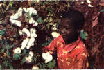 Picking Cotton by Deep South Specialties, Inc. (Jackson, Miss.)