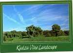 Kudzu Vine Landscape by Express Publishing Co. (New Orleans, La.)