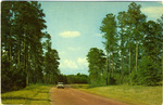 Along the Natchez Trace Parkway by Deep South Specialties, Inc. (Jackson, Miss.)