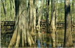 Natchez Trace Parkway, Cypress Swamp by Deep South Specialties, Inc. (Jackson, Miss.)